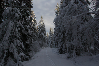 A track after a pair of skis lead the way into the snow covered forest
